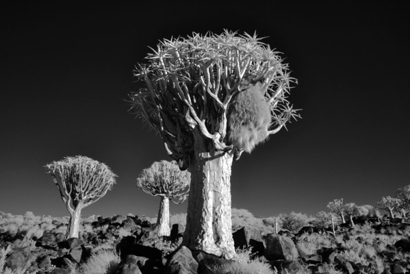 Namibia in Infrared